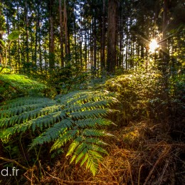 Sun entering the Bebour Forest