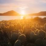 Salagou Cactus