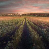 Bourgogne Canvas