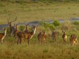 Diana Dea Lodge nature life